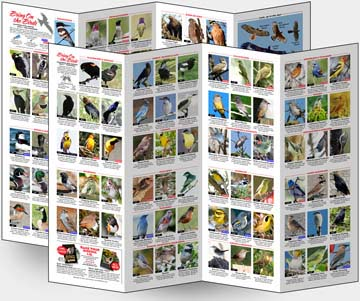 Photo: California Bird Identification Chart