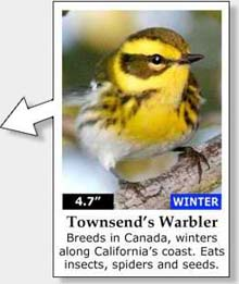 Photo: California Bird Chart Close-up