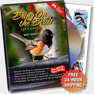 Photo: Bring On the Birds DVD and Chart
