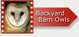 Backyard Barn Owl DVD navigation