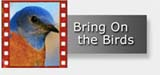 Bird Identification Video Navigation with Western Bluebird