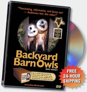 (Photo: Backyard Barn Owls DVD)